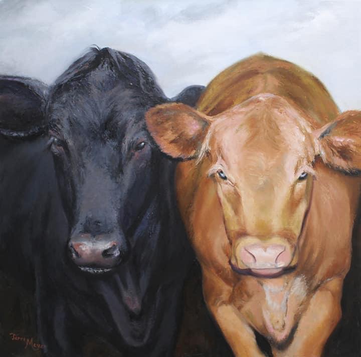 Cow Painting, Animal Painting by Ohio Artist Terri Meyer