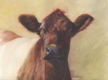 Cow Painting, Belted Cow Painting, Cow Portrait Painting by Ohio Artist Terri Meyer, Animal Painting