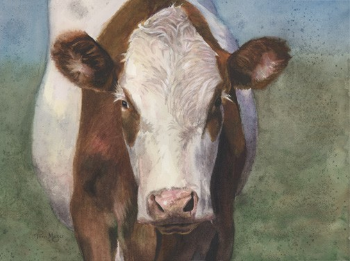 Cow Painting, Cow Portrait, Painting of a Belted Cow, Watercolor Painting of a cow